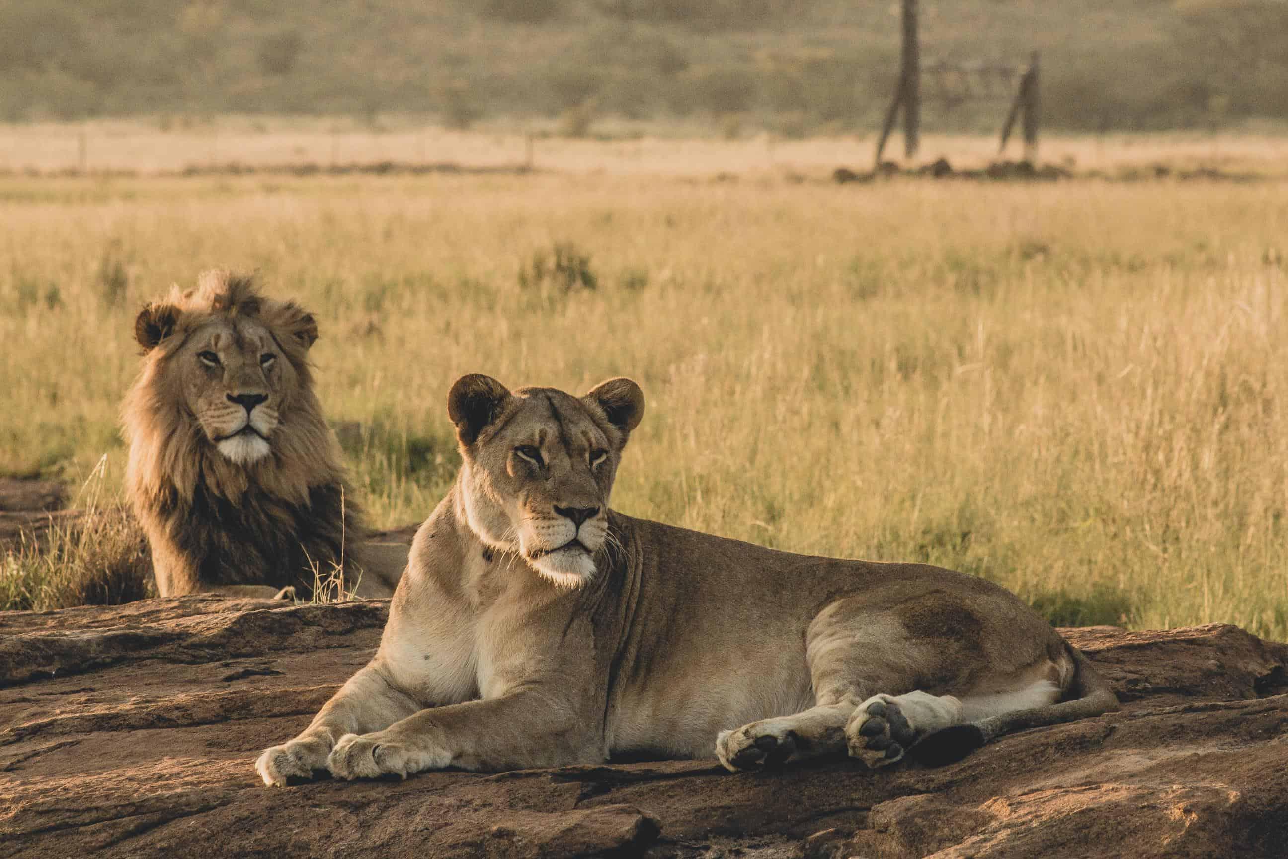 10 Charactersitics Of A Kingdom Leader